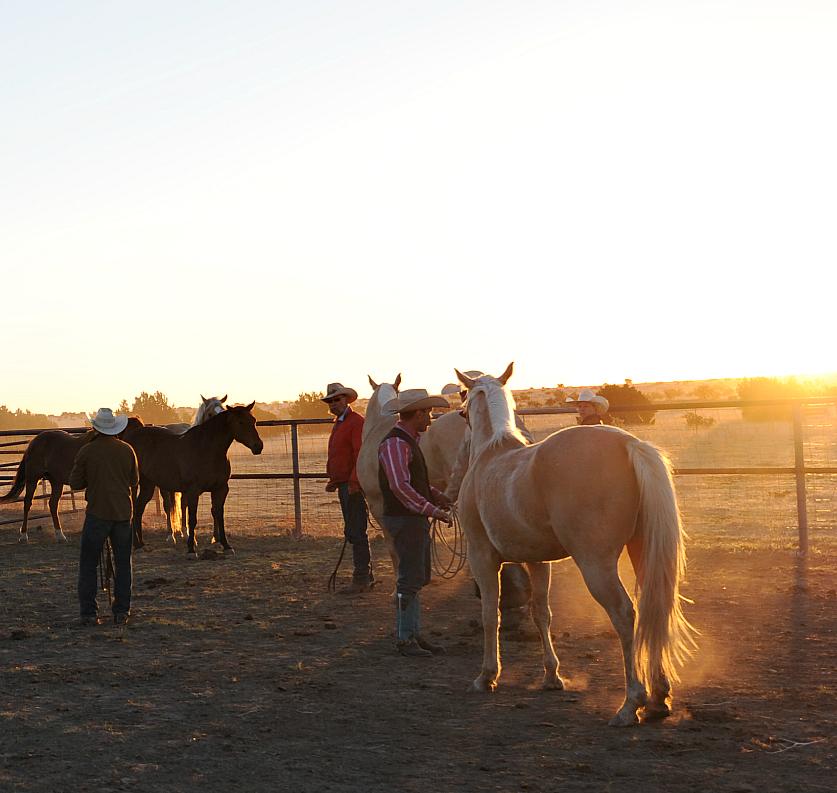 horsejingling