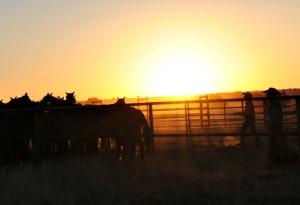 sunrisejingling
